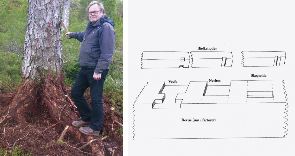 Til venstre: Prosjektleder Ørnulf Opdahl som stolt viser fram en fururot han har gravd fram. Lars har gravd opp 24 til i forrige uke. Til høyre: Bjelkene kan felles ned i revisèen på forskjellige måter. Vi har valgt den metoden som her kalles for Vevik.